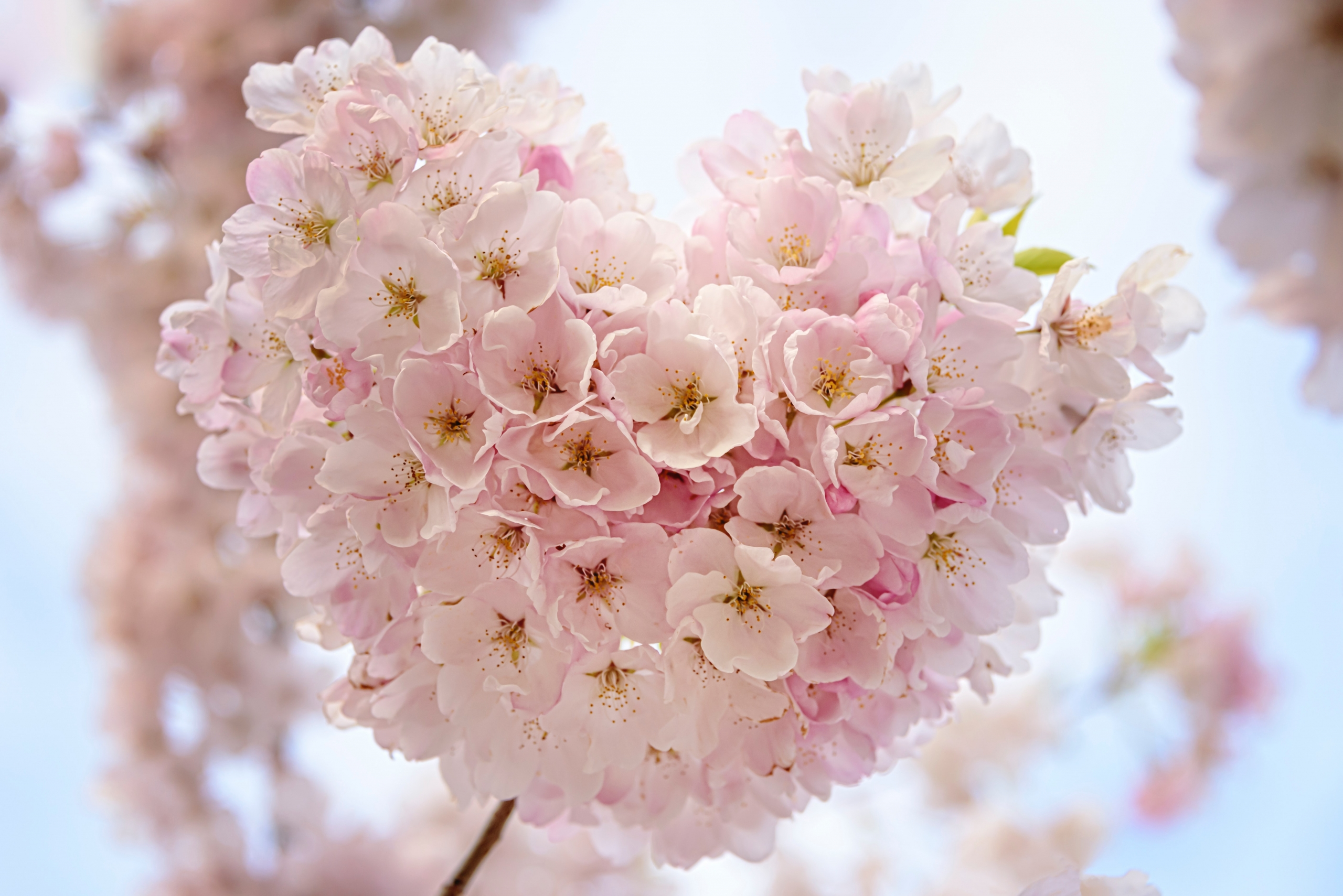 Small pink flowers in the shape of a heart